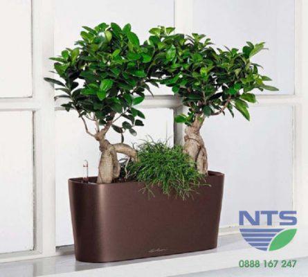 Chậu cây tự tưới cho cây bonsai